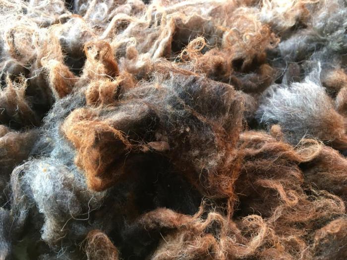 2020 Boreray Fleece from