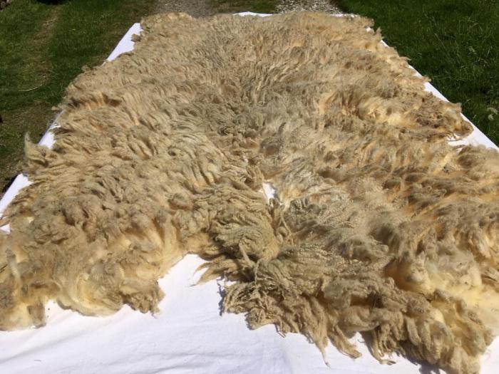 2021 Shetland Fleece from Lily
