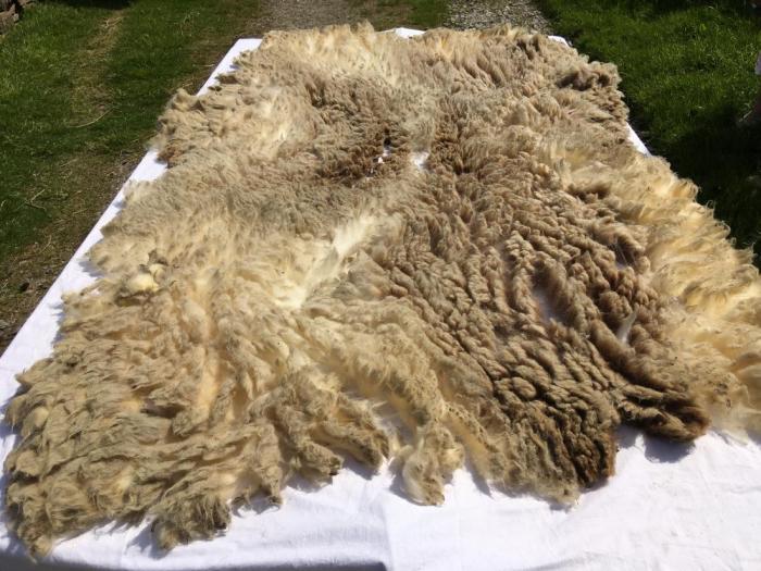 2021 Shetland Fleece from Winnie