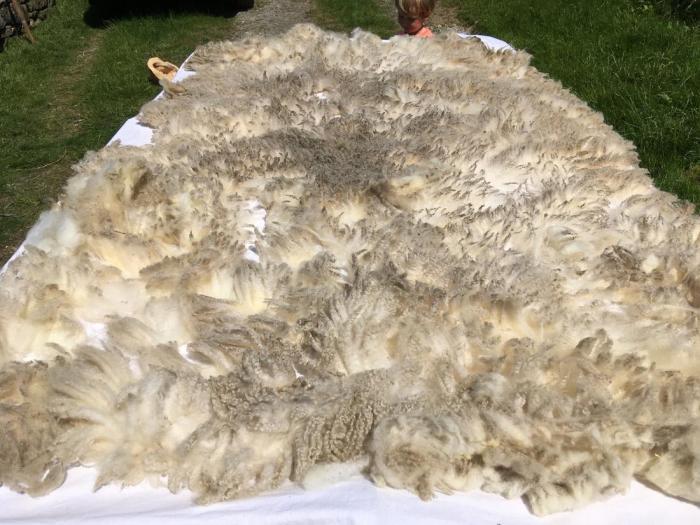 2021 Shetland Fleece from Daisy