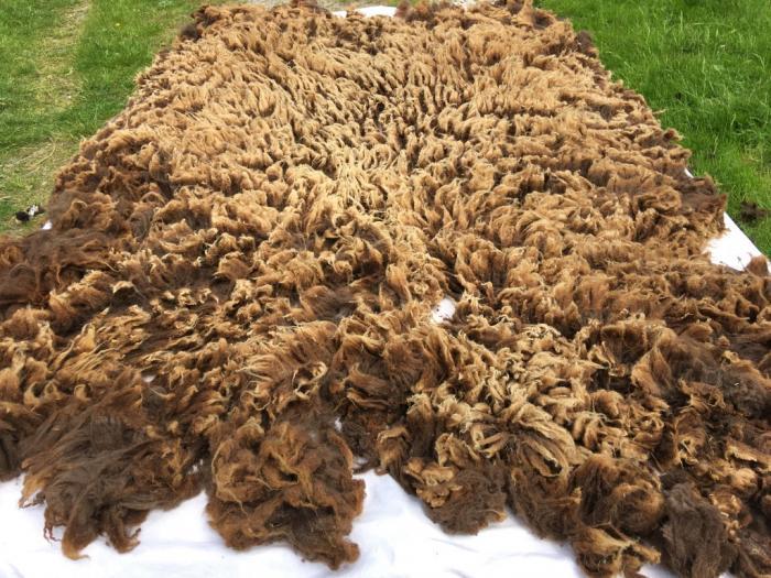 2021 Shetland Shearling Fleece from Beth