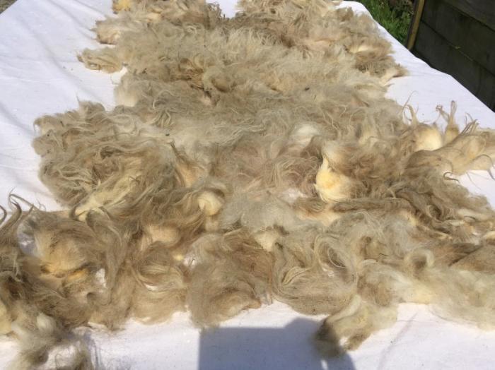 2021 Boreray Fleece from Fulvia