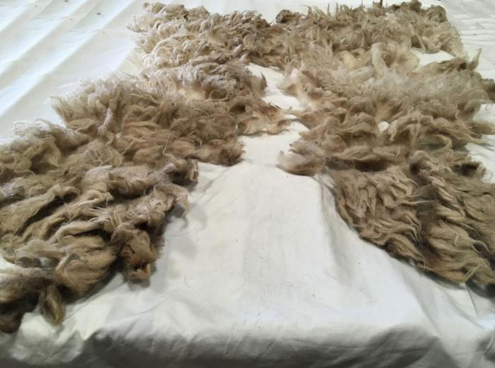 2020 Boreray Shearling Fleece