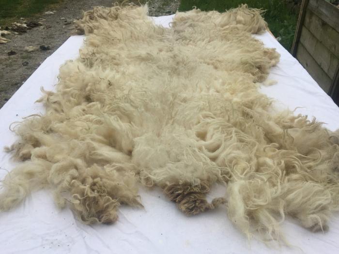 2021 Boreray Fleece from Benita