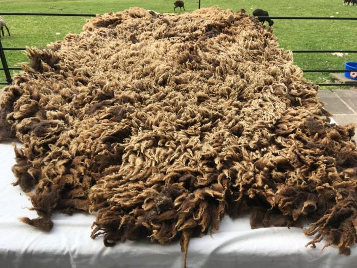 2020 Shetland Shearling Fleece from Jura