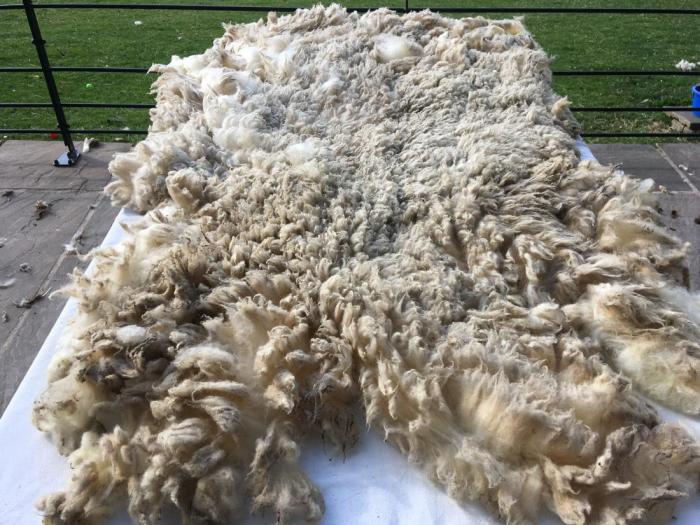 2020 Shetland Shearling Fleece