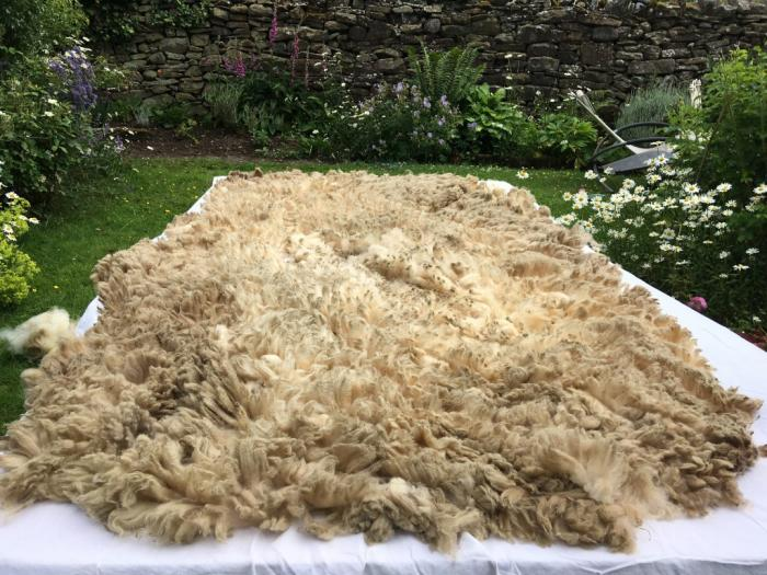 2021 Shetland Fleece from Neo