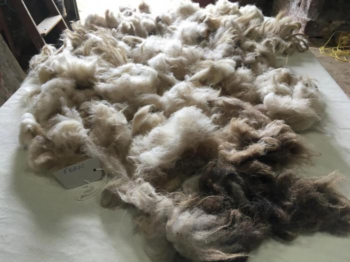 2020 Boreray Fleece from Fern
