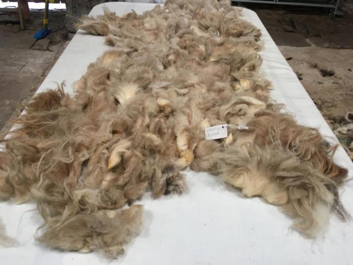 2020 Boreray Fleece from Gaynor