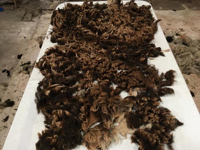 2020 Soay Fleece from Faslane