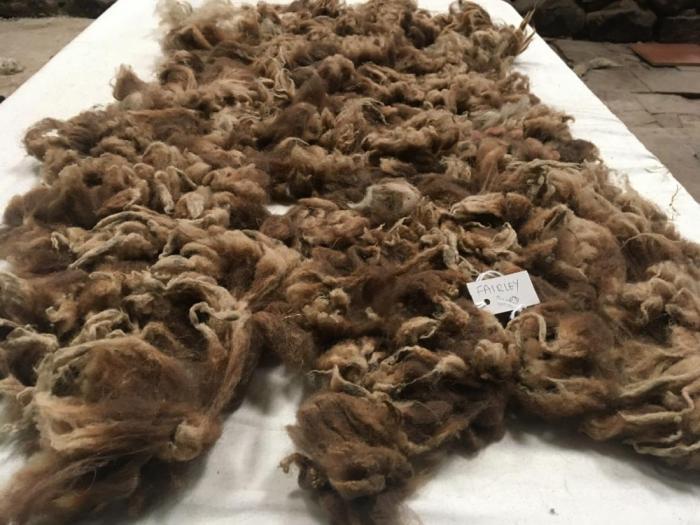 2020 Soay Fleece from Fairlie
