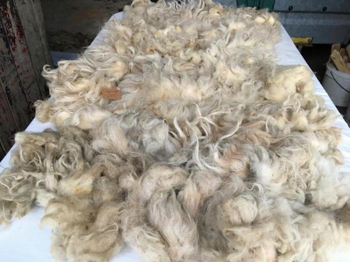 2020 Boreray Fleece from Benita