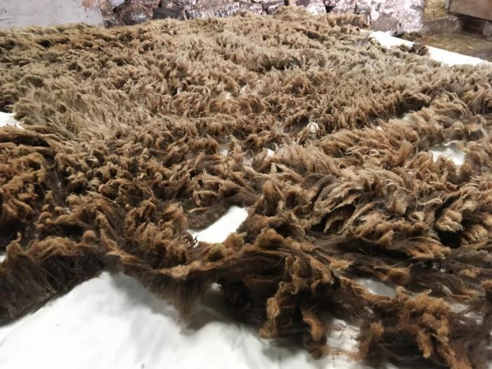 2020 Shetland Shearling Fleece from Lunga